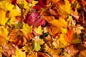 autumn-leaves-300x200