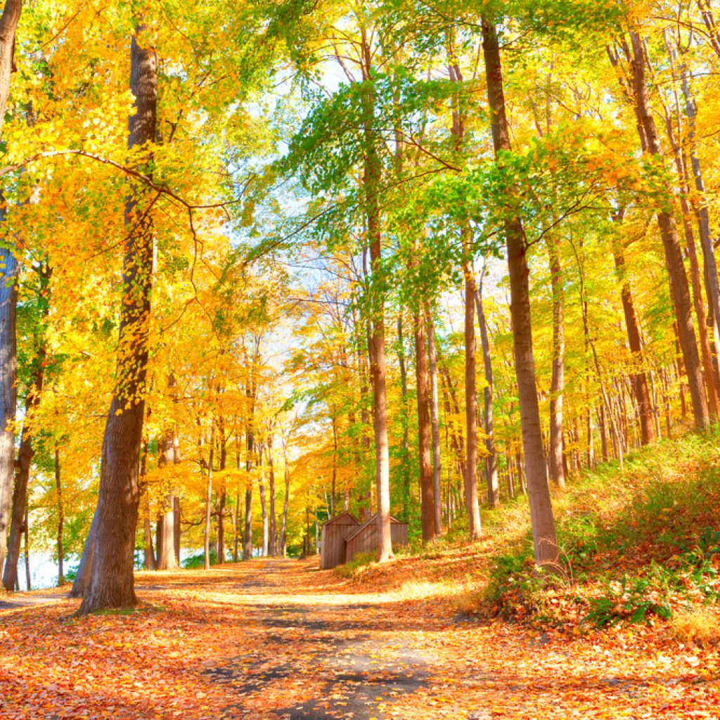Enjoy The Best Fall Color Right Here In New Jersey