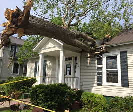 If a tree falls on your NJ home     | Realtor Sue Adler